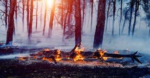 Лесной пожар упаденное дерево горится к земле много дым когда лесной пожар стоковые изображения rf