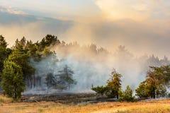 Лесной пожар упаденное дерево горится к земле много дым когда лесной пожар Стоковые Изображения