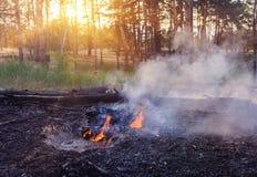 Лесной пожар упаденное дерево горится к земле много дым когда лесной пожар Стоковые Фотографии RF
