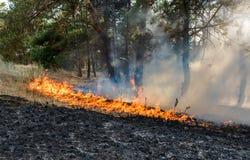 Лесной пожар упаденное дерево горится к земле много дым когда лесной пожар Стоковые Фото