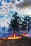 Лесной пожар упаденное дерево горится к земле много дым когда vildfire стоковое изображение