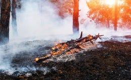 Лесной пожар упаденное дерево горится к земле много дым когда vildfire Стоковое Фото