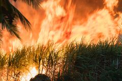 Лесной пожар стоковая фотография rf