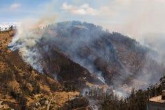 Лесной пожар стоковая фотография