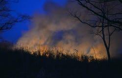 Лесной пожар 20 стоковая фотография rf