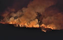 Лесной пожар 4 стоковая фотография rf