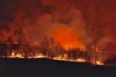 Лесной пожар 5 стоковое изображение