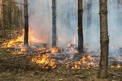 Лесной пожар стоковое фото