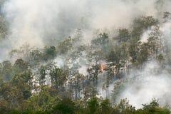 Лесной пожар Стоковое фото RF