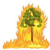 Лесной пожар бесплатная иллюстрация