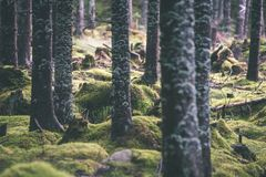 Лесные деревья лета предпосылки солнечного света древесной зелени природы - VI Стоковое Изображение