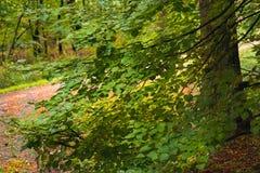 Лесные деревья предпосылки солнечного света древесной зелени природы стоковые изображения