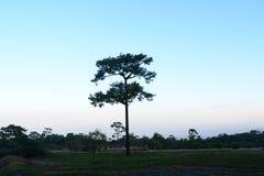 Лесные деревья солнечности зеленого леса естественные Стоковые Фото
