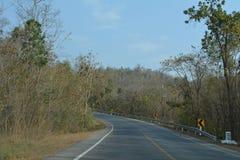 Лесные деревья солнечности зеленого леса естественные Стоковые Изображения RF