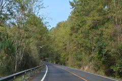 Лесные деревья солнечности зеленого леса естественные Стоковое фото RF