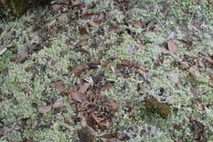 Лесные деревья солнечности зеленого леса естественные Стоковые Фотографии RF