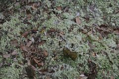 Лесные деревья солнечности зеленого леса естественные Стоковая Фотография RF