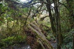 Лесные деревья солнечности зеленого леса естественные Стоковое Изображение RF