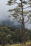 Лесные деревья лета солнечные и зеленая трава Природа стоковое изображение rf