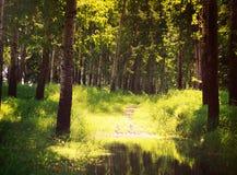 Лесные деревья лета солнечные и зеленая трава Природа Стоковое фото RF