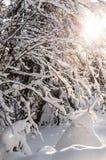 Лесные деревья зимы в снеге стоковые фотографии rf