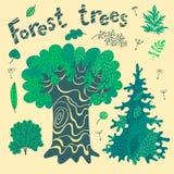Лесные деревья, кусты, выходят. Стоковые Фото