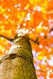 Лесные деревья осени от дна предпосылки солнечного света древесной зелени природы, мягкий фокус! малая глубина поля Стоковые Изображения RF