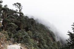 Лесные деревья покрыли облако тумана Стоковое Изображение RF