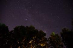 Лесные деревья под млечным путем в ночном небе стоковые фотографии rf
