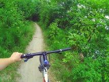 Лесные деревья пути рулевого колеса велосипеда Стоковые Изображения RF
