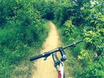 Лесные деревья пути рулевого колеса велосипеда Стоковая Фотография
