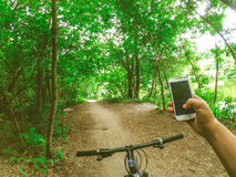Лесные деревья пути рулевого колеса велосипеда Стоковое Изображение RF