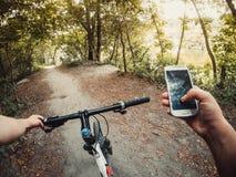 Лесные деревья пути рулевого колеса велосипеда Стоковое фото RF