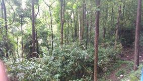 Лесные деревья сада Стоковое фото RF