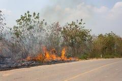 Лесные пожары стоковая фотография