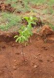 лесовозвращение стоковые изображения rf