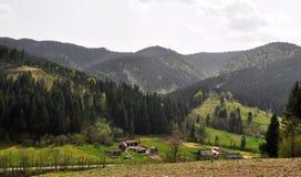 Лесопилка в лесе Стоковые Изображения RF