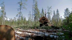 Лесоруб Buncher управляет через расчистку в лесе сток-видео