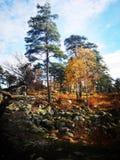 Лесохозяйство в гениальной погоде осени стоковые фотографии rf