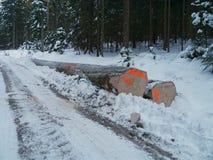 Лесохозяйство в зиме с снежной древесиной стоковые фото