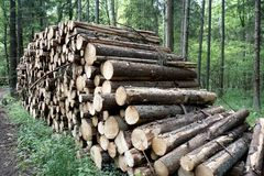 Лесохозяйство в Bialowieza Польше Стоковая Фотография RF