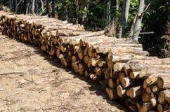 лесохозяйство Защита лесов Удаление мертвой древесины и мертвых деревьев стоковые изображения