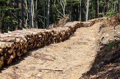 Лесохозяйство Здоровье леса Удаление мертвых и больных деревьев стоковое изображение rf