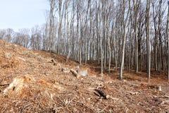 лесохозяйство стоковые фото