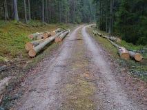 Лесохозяйство Стоковое фото RF