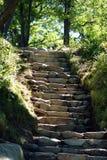 Лестница (вверх) Стоковые Изображения RF
