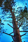 Лестница ветви дерева Стоковое Изображение