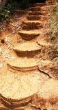 Лестница водит до горы Стоковая Фотография