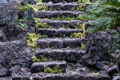 Лестница вулканической породы; округленные камни несенные и Папоротники в отказах; fronds ладони, который нужно выпрямить hilo Га стоковое фото rf