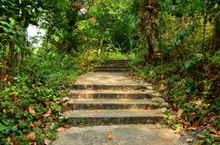 Лестница в лесе, следе Marang, Сингапуре стоковое фото rf